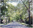 Residential Street, Port Credit