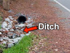 Ditch next to a road