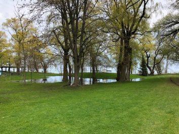 Wet grass at City park