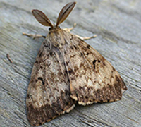Brown moth on tree bark