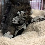 Photo of a squirrel covered in cement