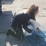 Animal Services staff rescuing a swan