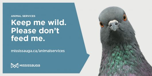 Image with text reminding people not to feed wildlife, with a photo of a pigeon.