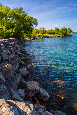 Shoreline with rocks and trees