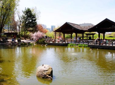 Pond with pavilion in a park