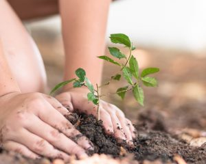 Tree planting growing on soil in child's hand for environmental protection. Celebrating earth day